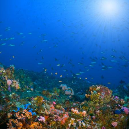 Underwater Alor 1